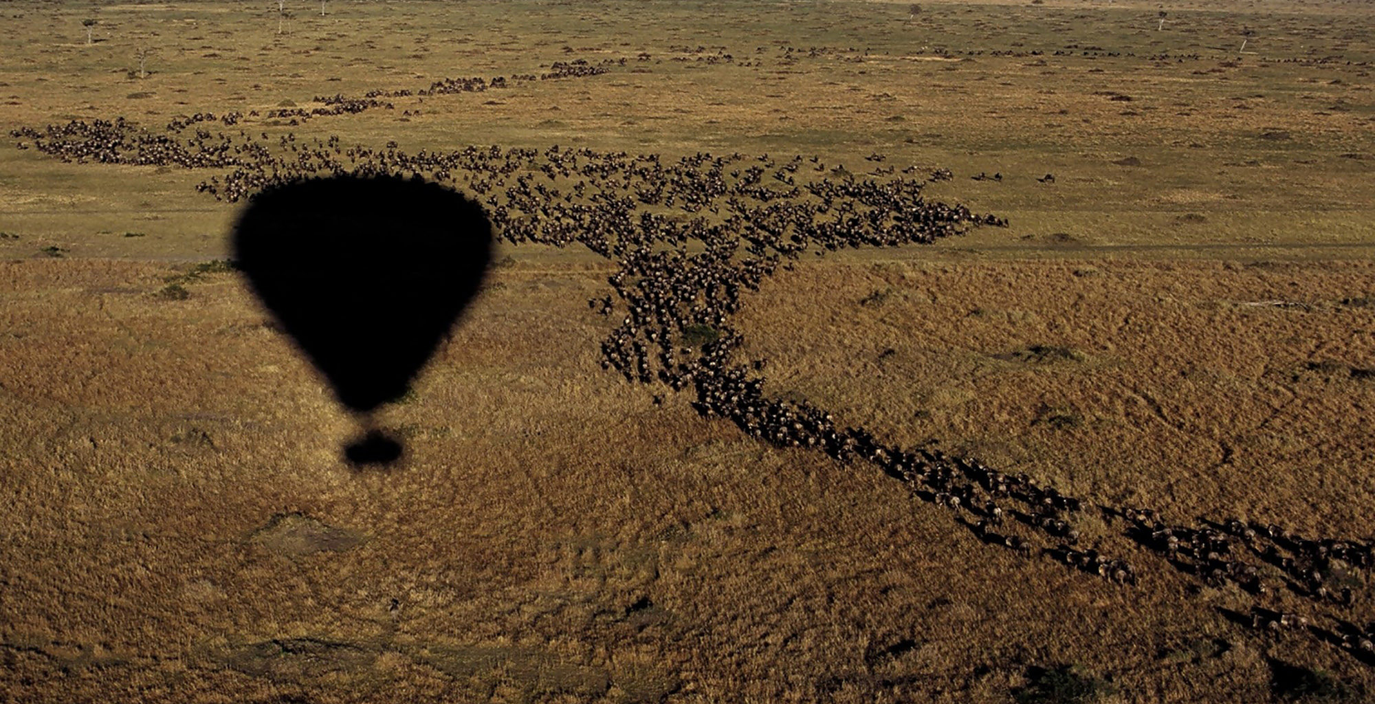 Kenya-Maasai-Mara-Aerial-Migration