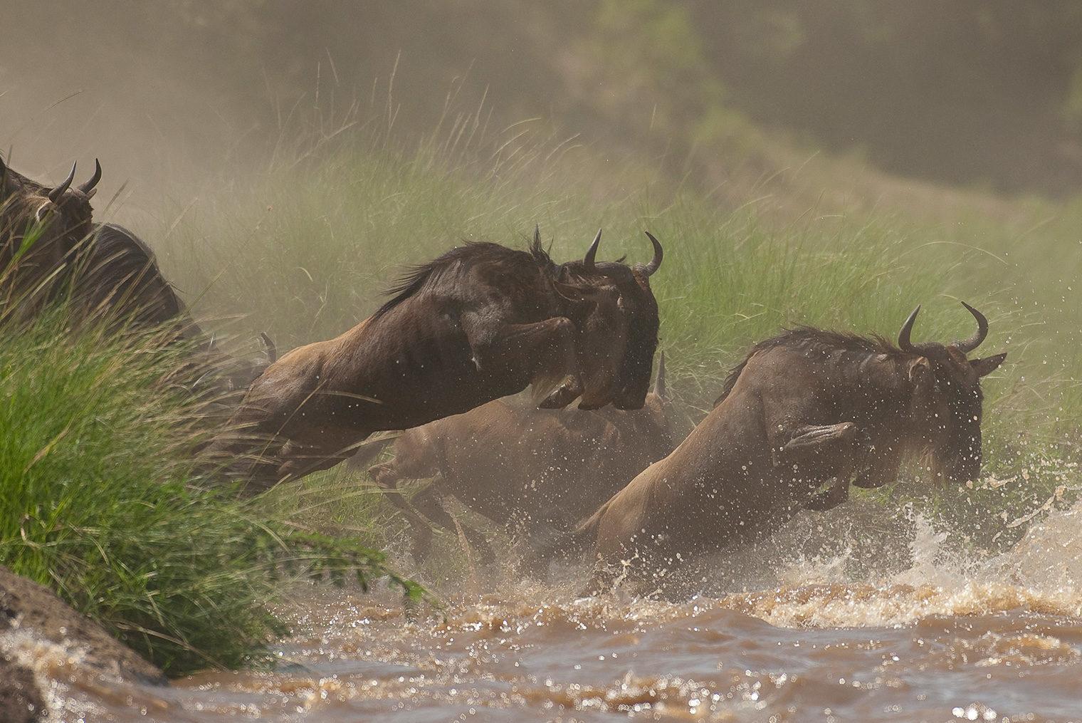 Masaai-Mara-Area-Wildebeest-Hero