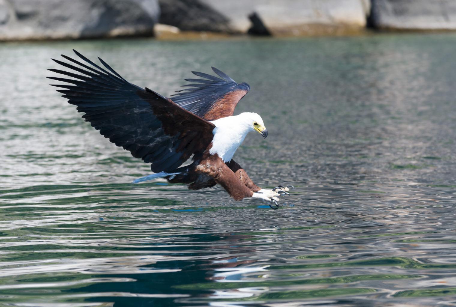 Lake Malawi BirdMalawi