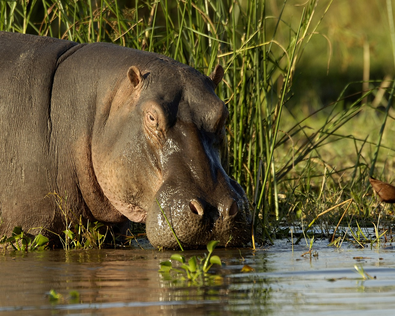 Liwonde National Park Malwai Wildlife