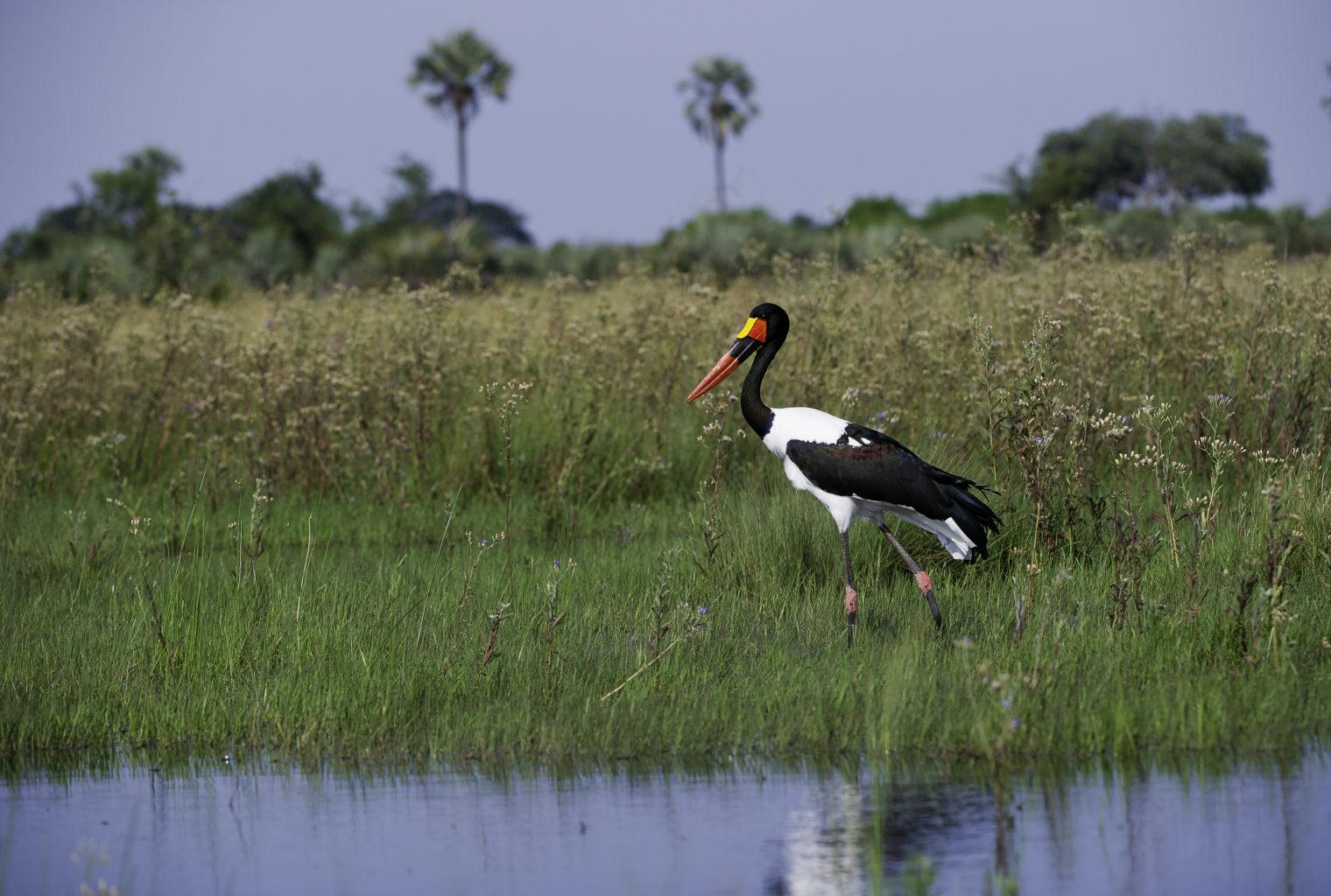Botswana, Okavango Delta, Kwetsani Wildlife