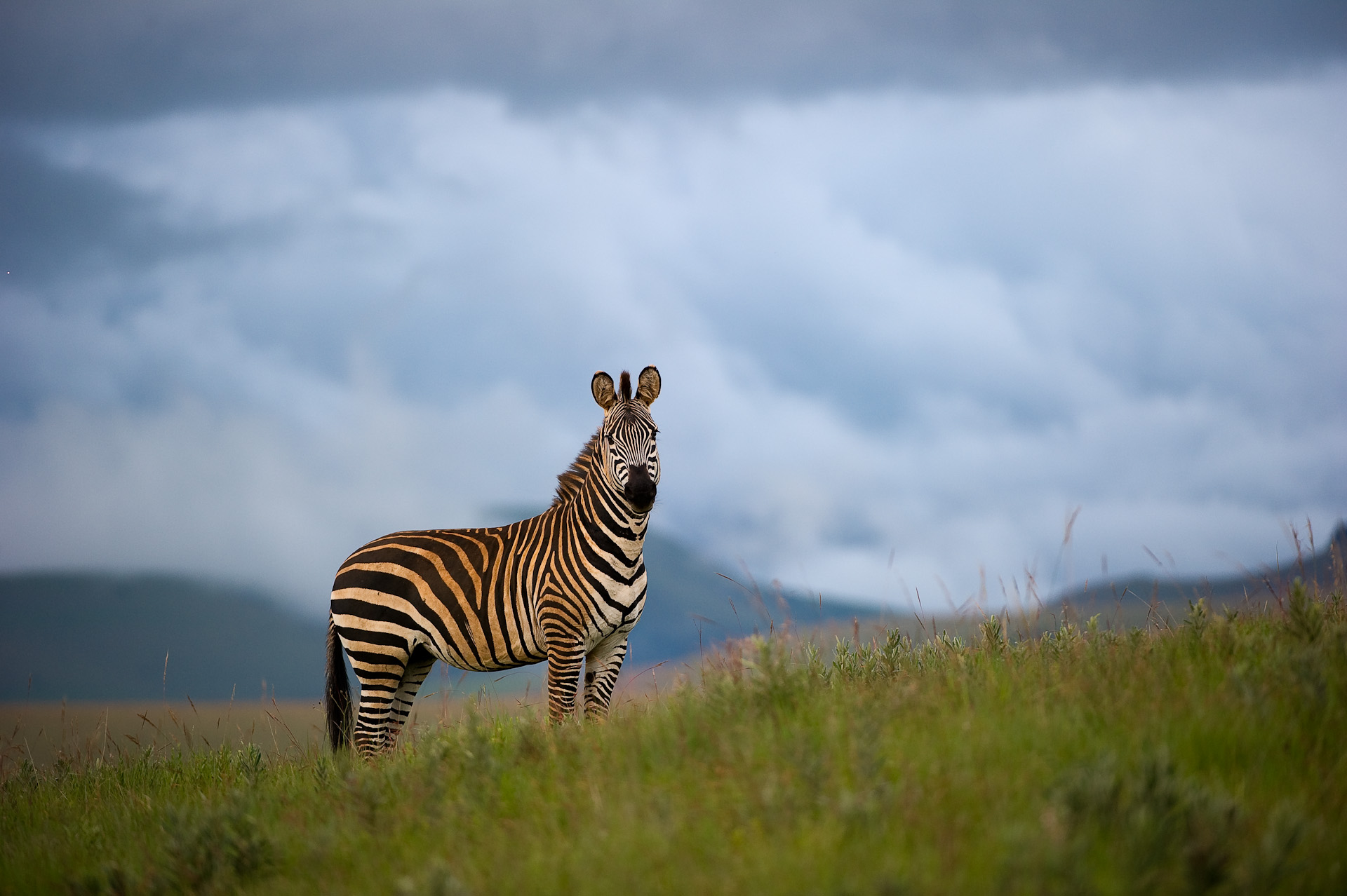 Nyika National Park Wildlife