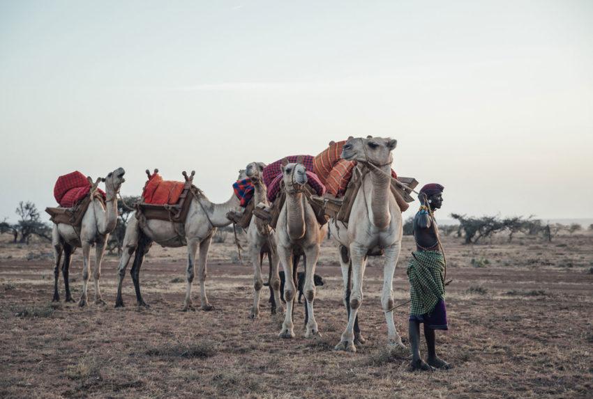 Kenya Laikipia Ol Malo Camel Walk