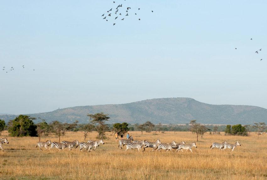 OlPejeta-walking-safari-1-Kenya-Safari