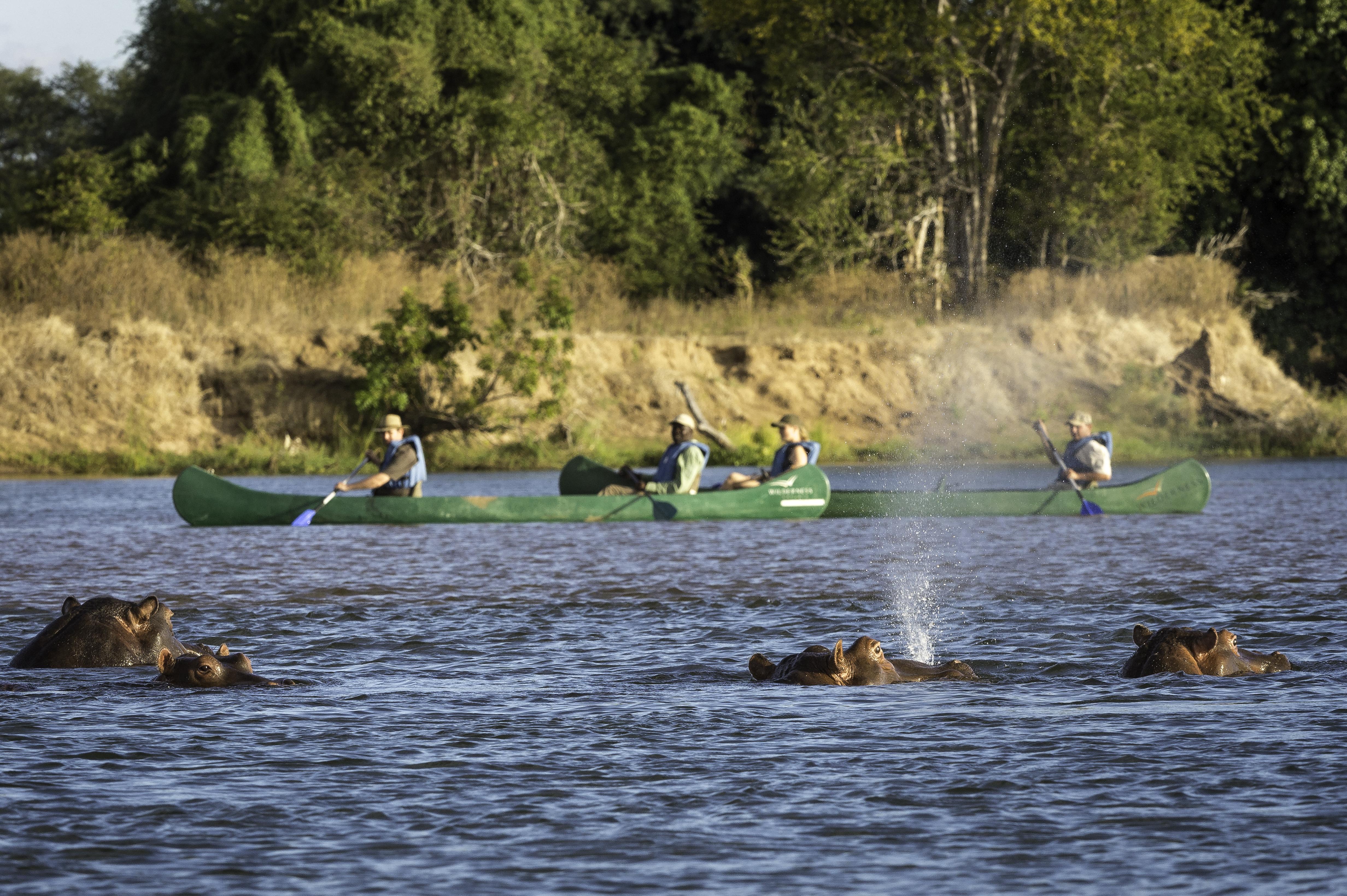 Mana Pools Zimbabwe Elephant Shot
