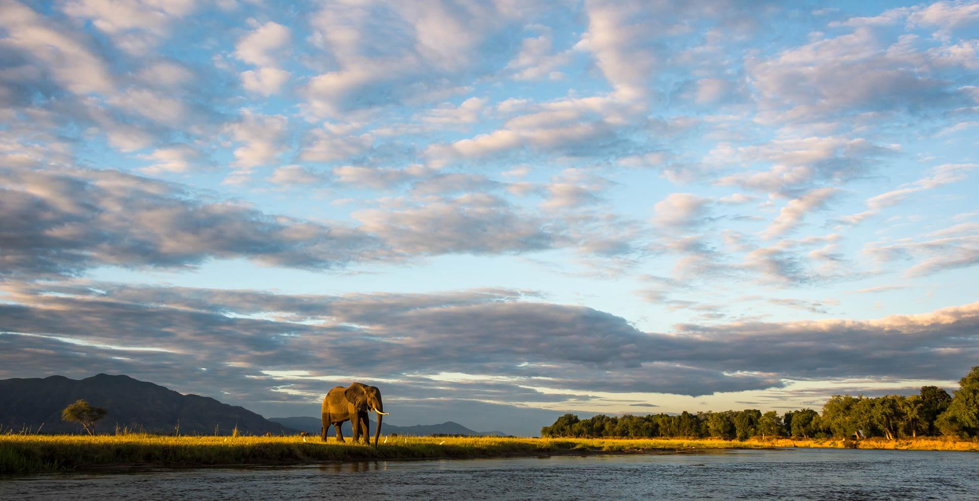 Zimbabwe-Mana-Pools-Wildlife-Elephant