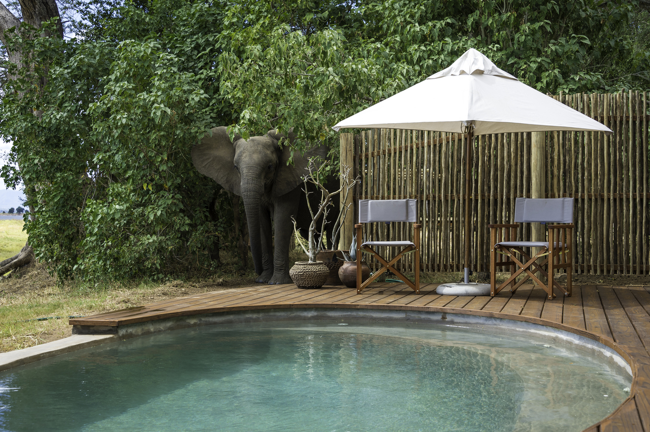 Ruckomechi Zimbabwe Pool