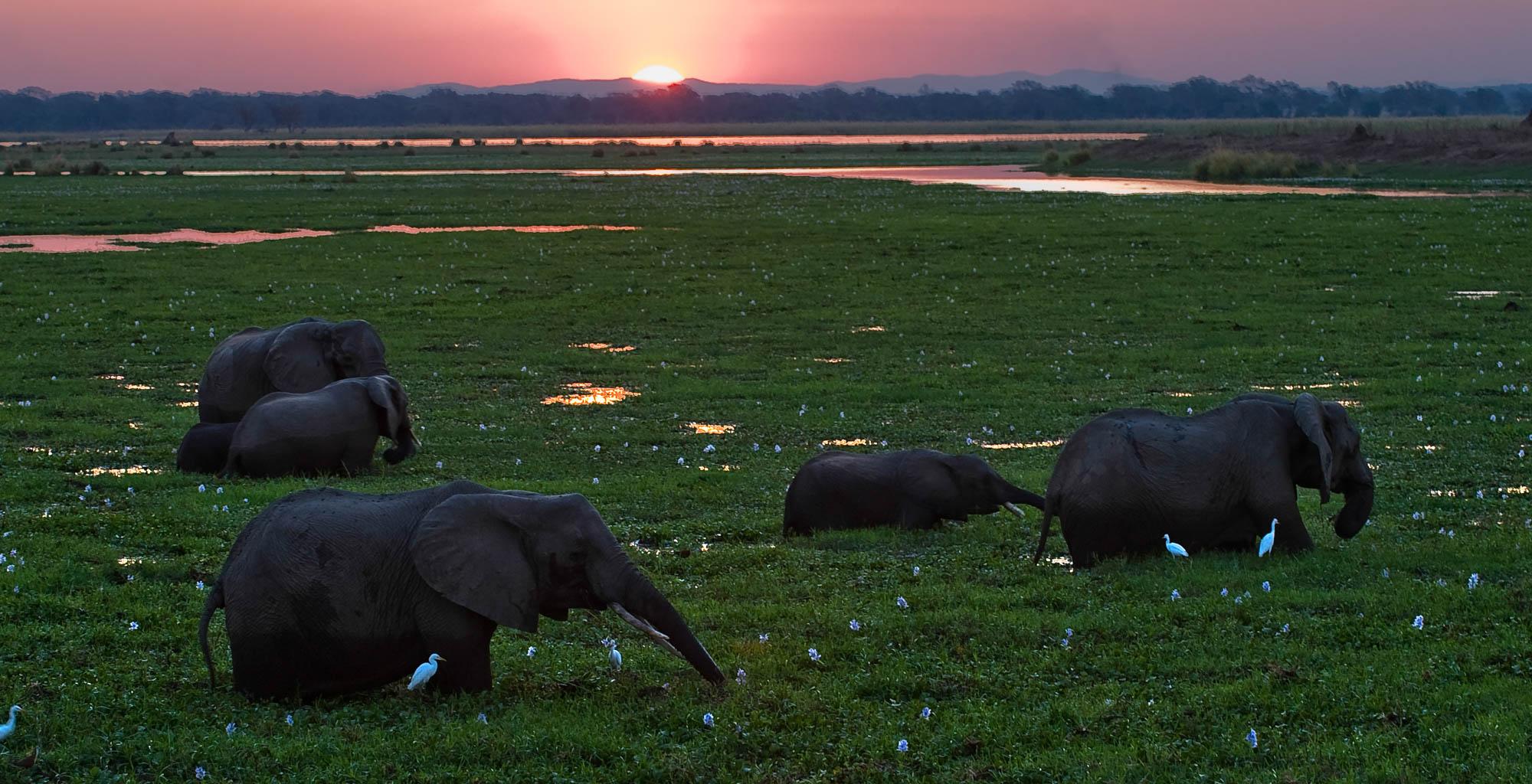 Zimbabwe-Mana-Pools-Elephant-Sunset