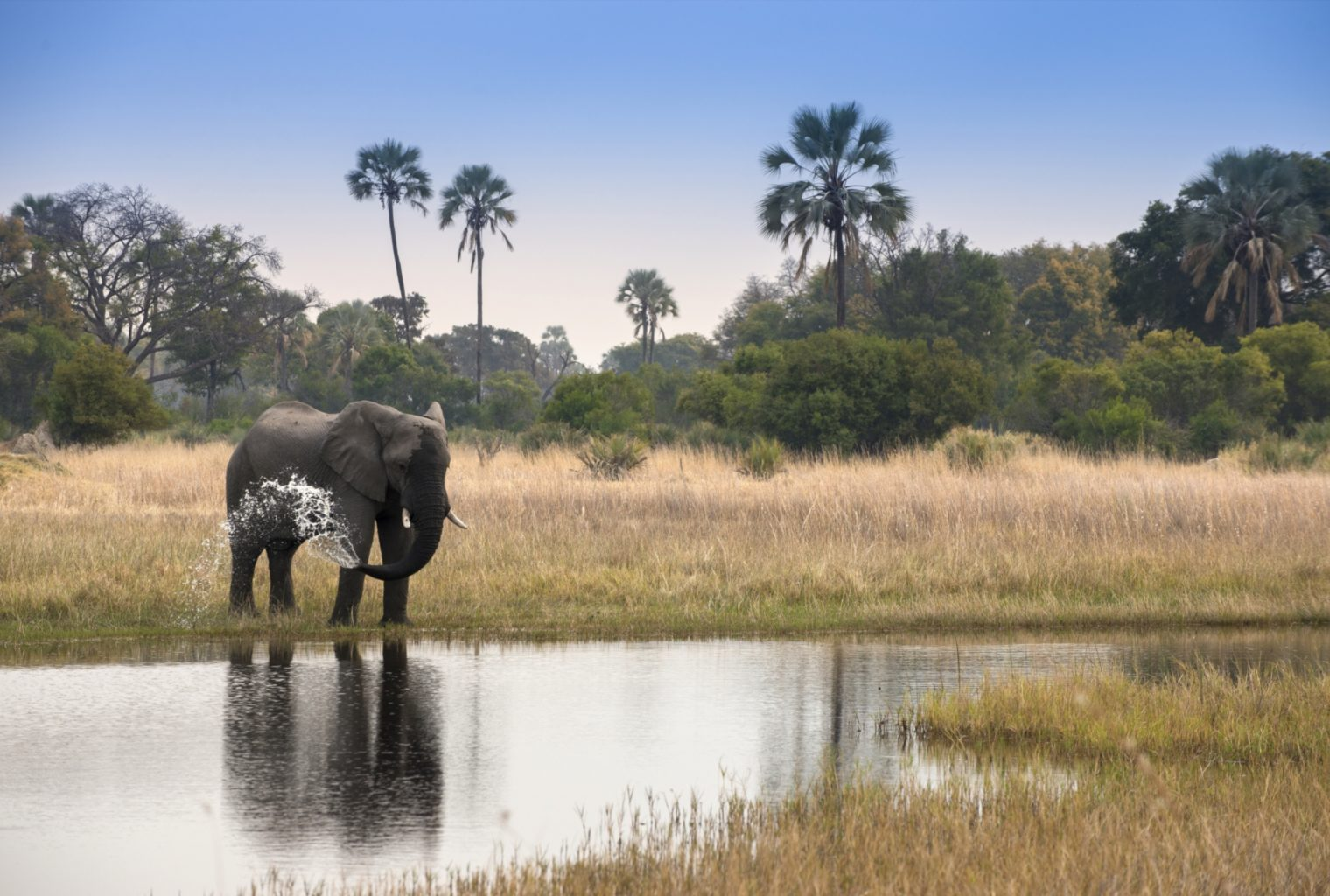 Sandibe, Okavango, Botswana, Elepahnt