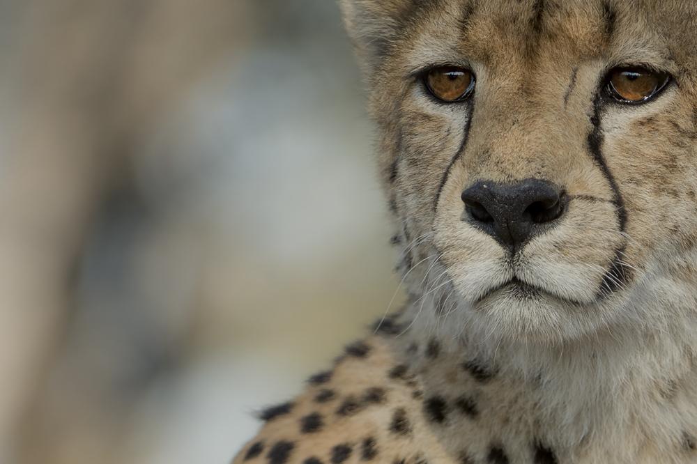 Singita-Castleton-Wildlife1