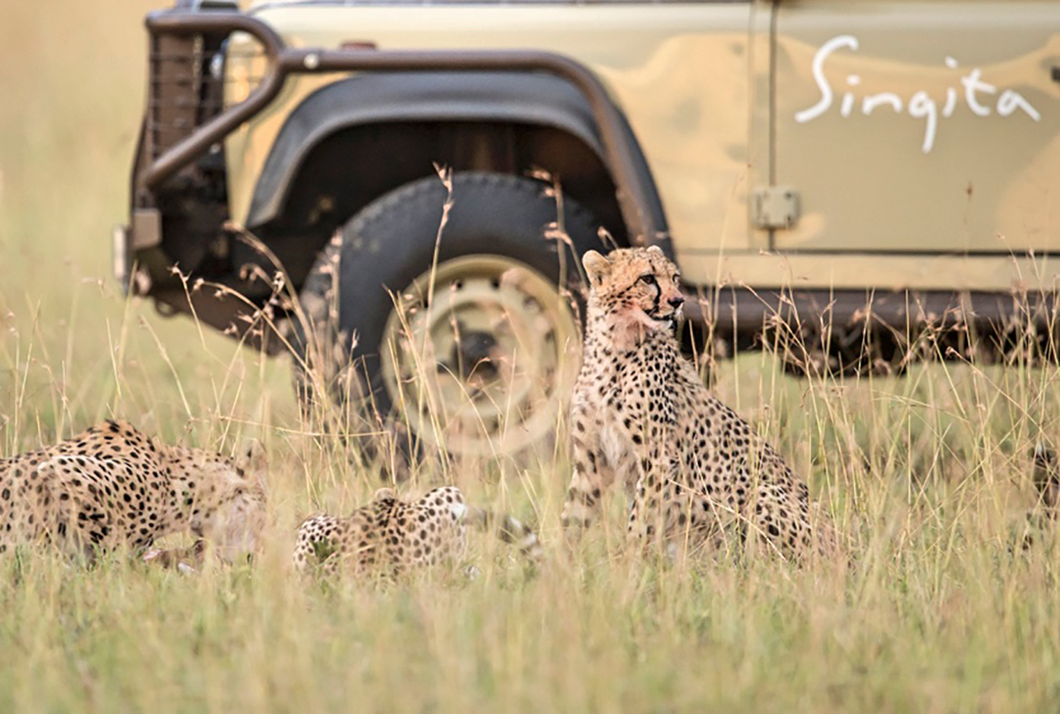 Singita-Lebombo-Lodge-South-Africa-Game-Drive