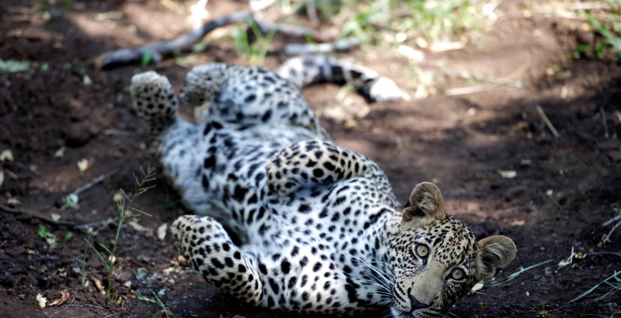 Singita National Park widlife