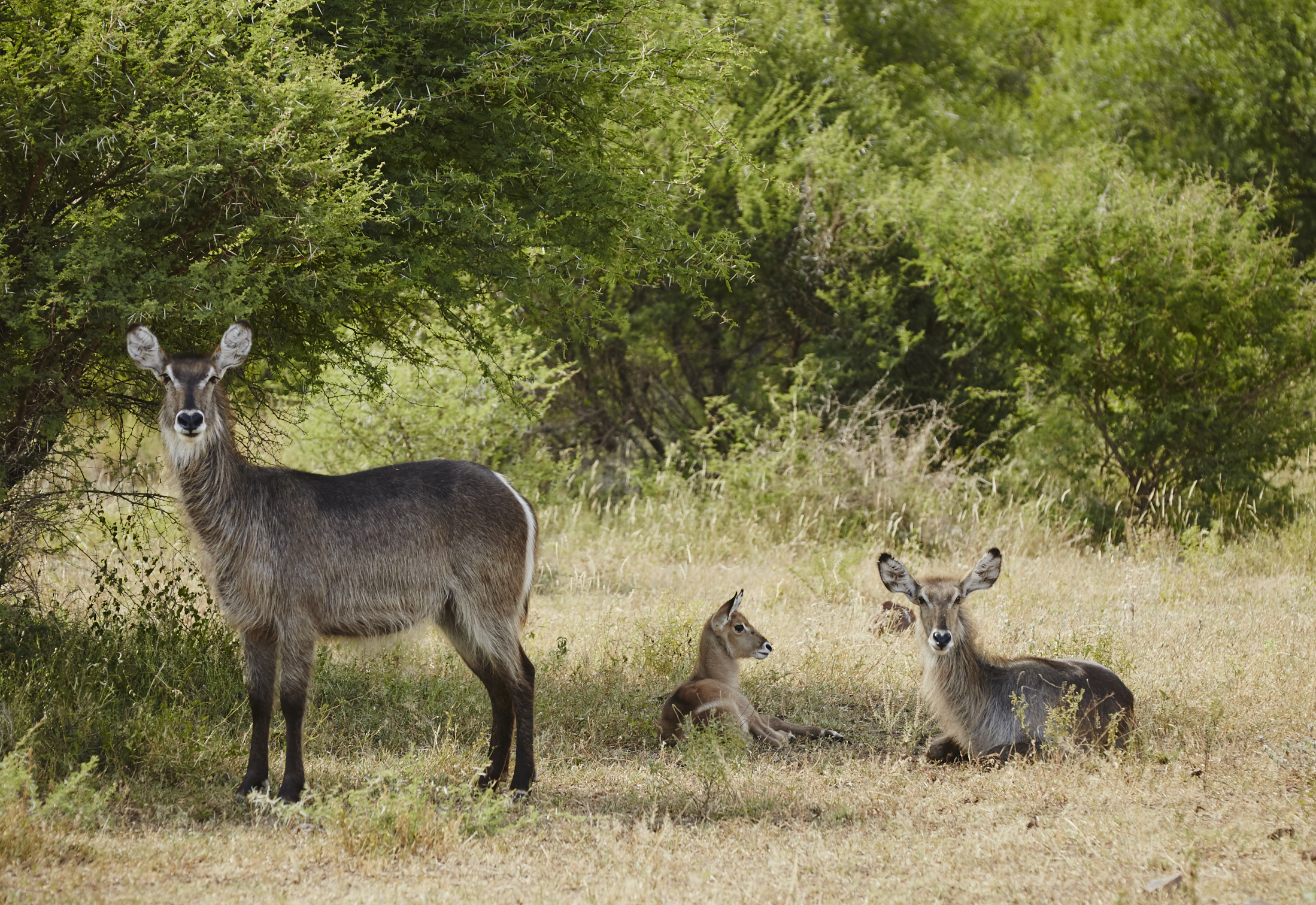 Singita-Sweni-Lodge-Wildlife6