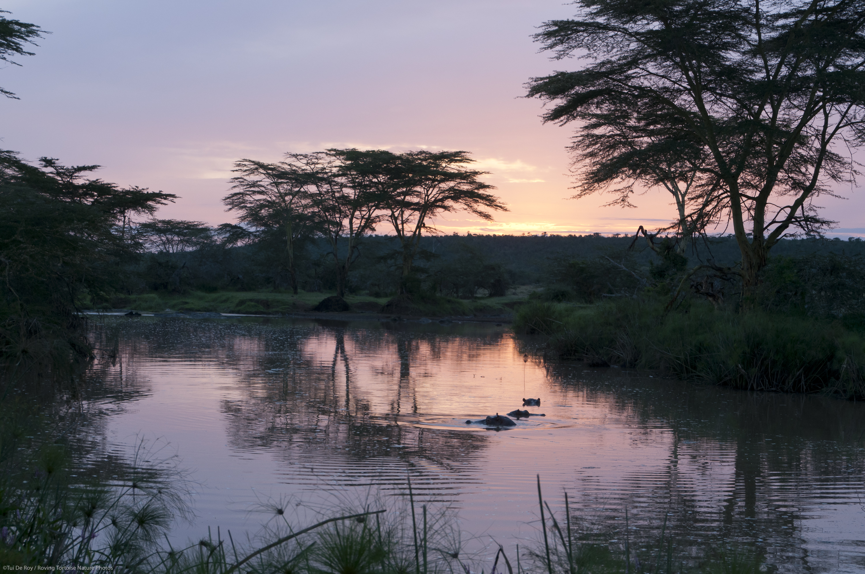 Sosian Game Lodge Kenya Hippo Sunset