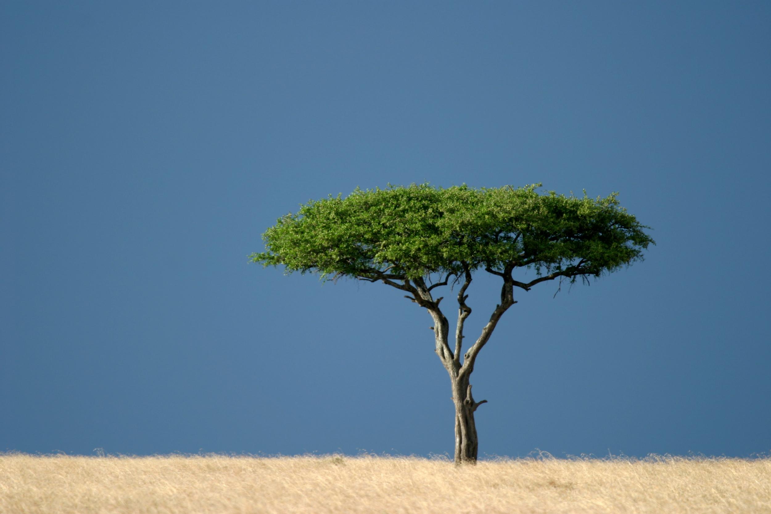 Roberts Safaris Kenya Tree
