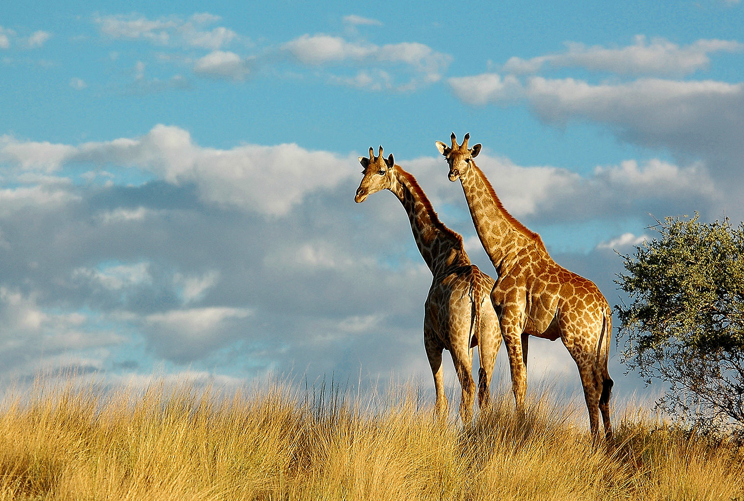 Tswalu-Kalahari-South-Africa-Giraffe-with-Big-Sky-