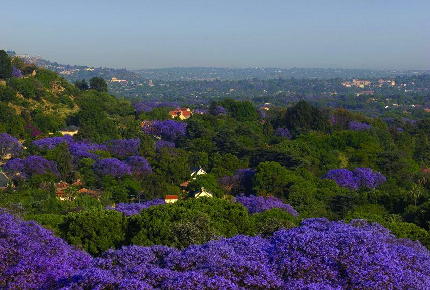 South-Africa-Johannesburg-Pretoria-Landscape-Hero