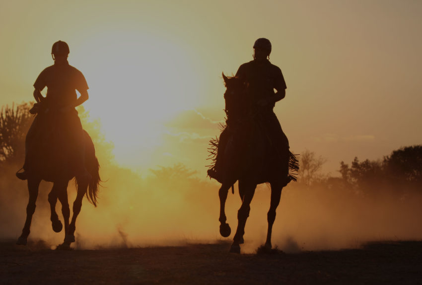 Waterberg-Tinted-Hero-Horse-Riding