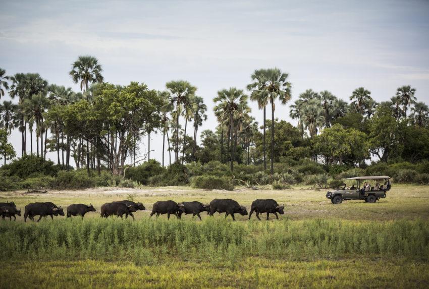 Mombo-Camp-Botswana-Wildlife