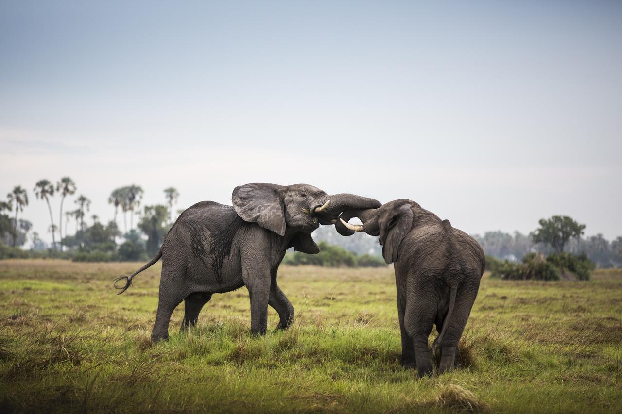 Mombo-Camp-Botswana-Elephant