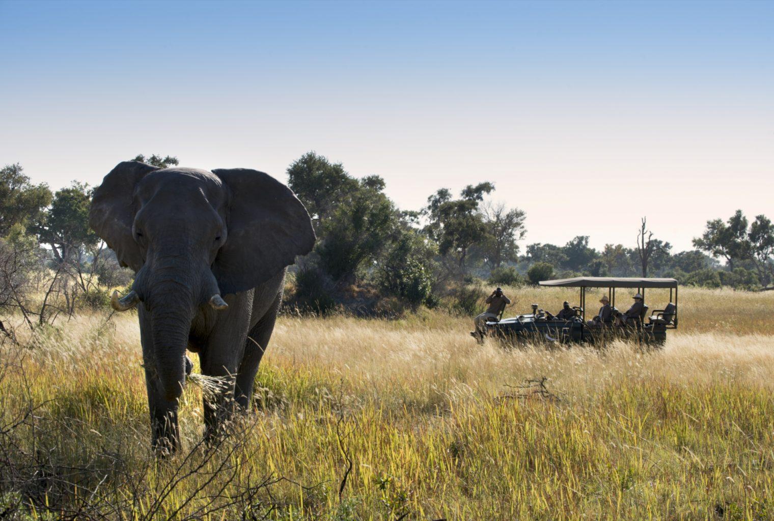 &Beyond, Xaranna, Okavango Delta, Camp, Game Drive