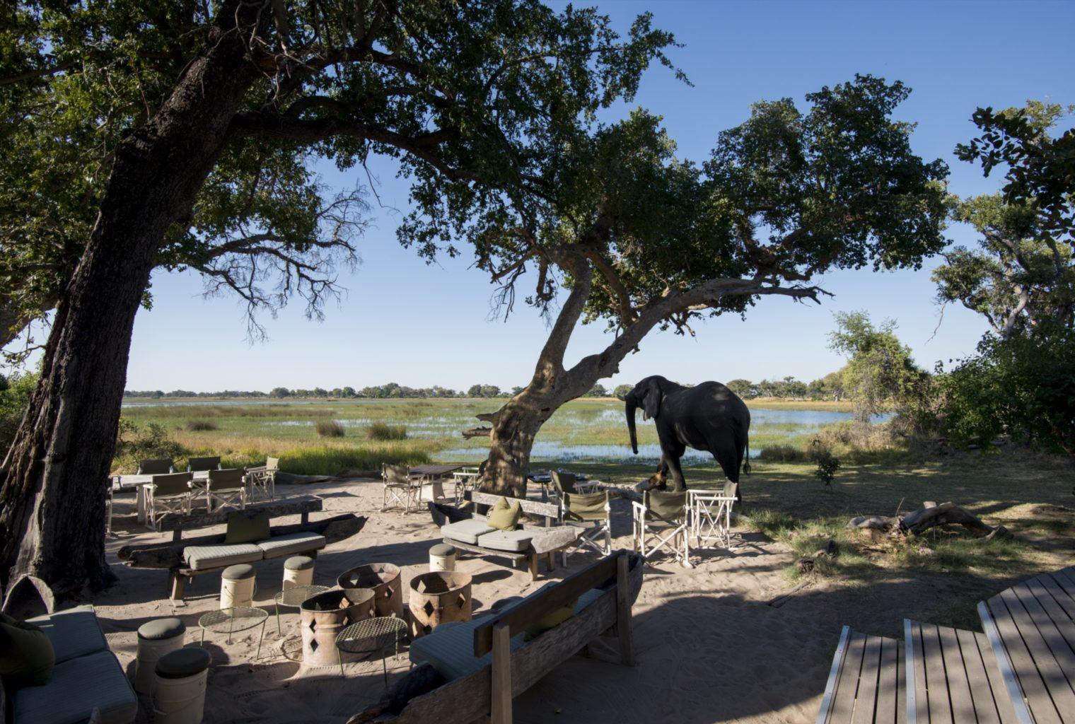 &Beyond, Xaranna, Okavango Delta, Camp, Guest Area Elephant