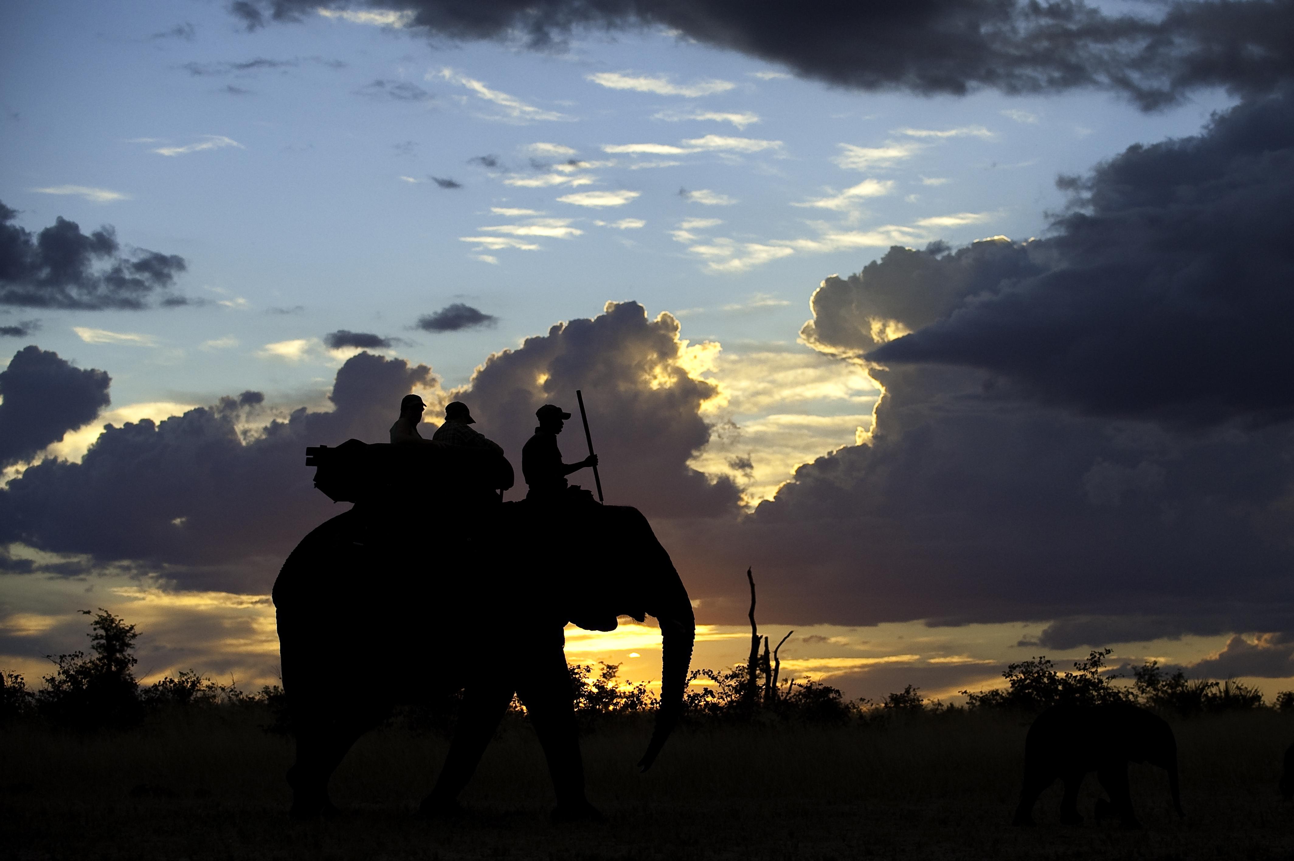 Abu-Elephant-Camp-Sunset