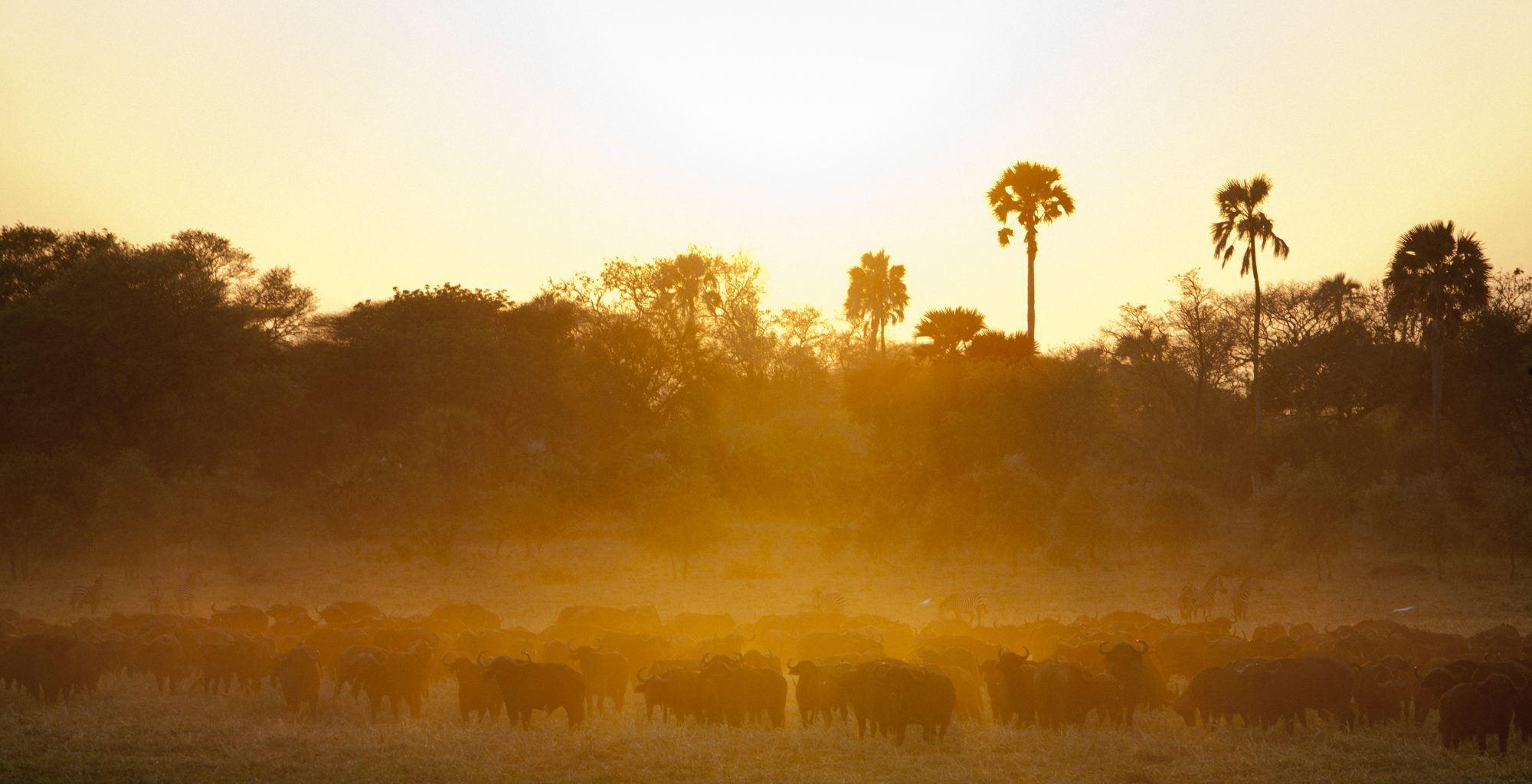 Tanzania-Katavi-Wildlife-Sunset