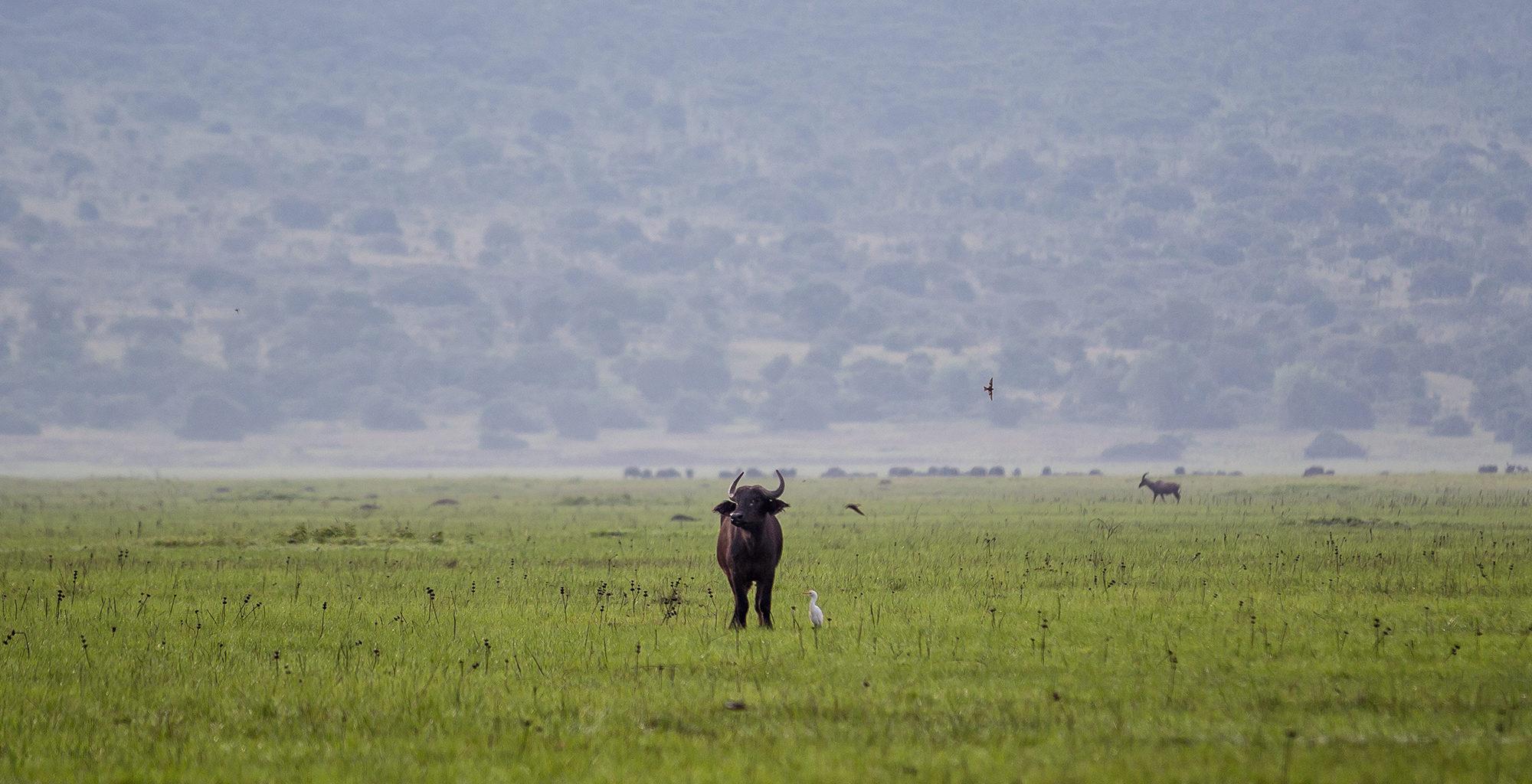 Rwanda-Akagera-National-Park-Wildlife