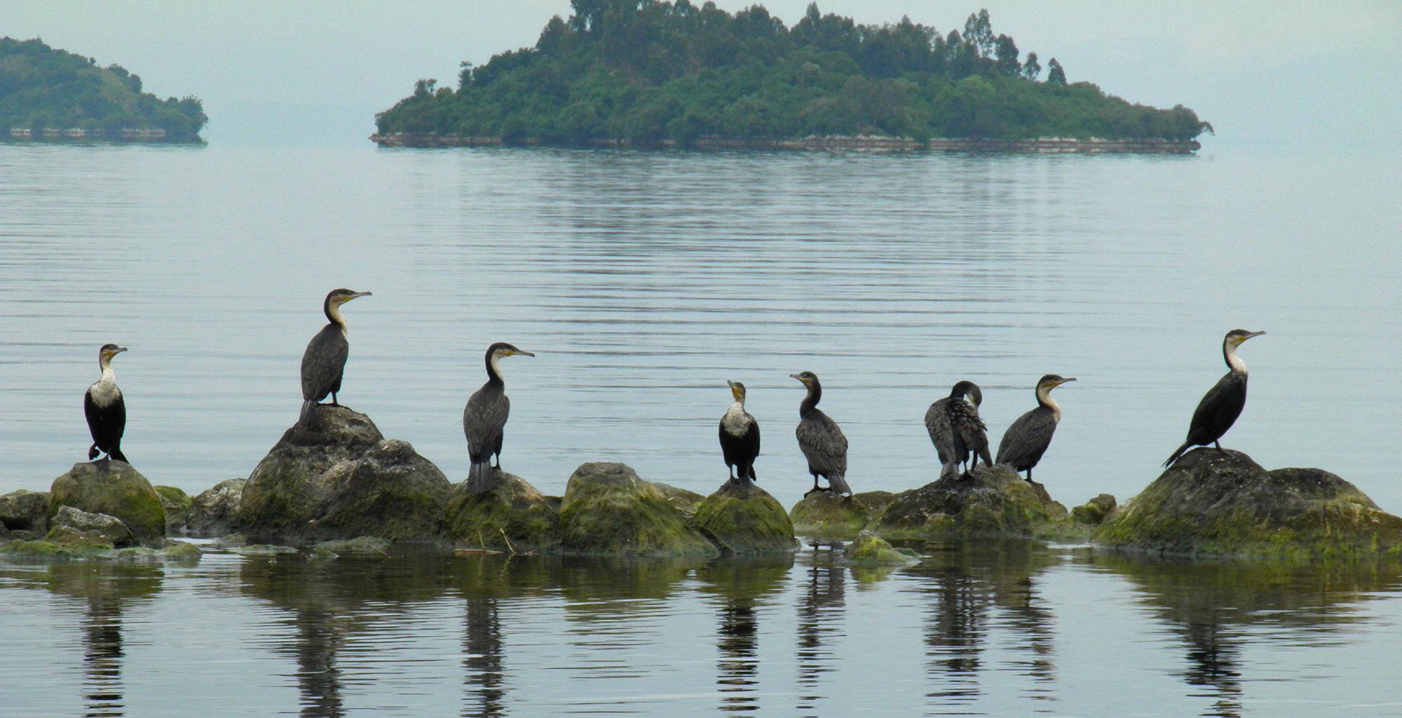 Rwanda-Lake-Kivu-Wildlife