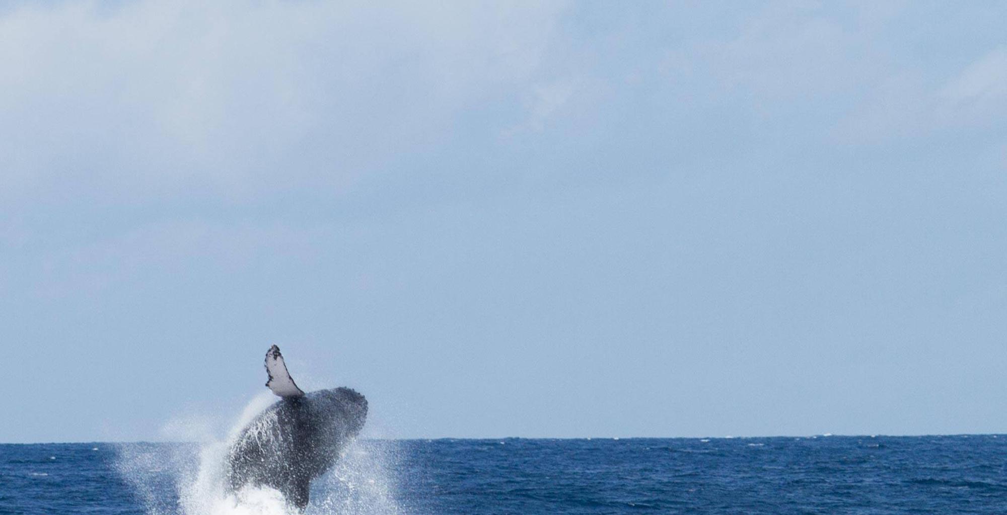 Kenya-Hemingways-Watamu-Whale