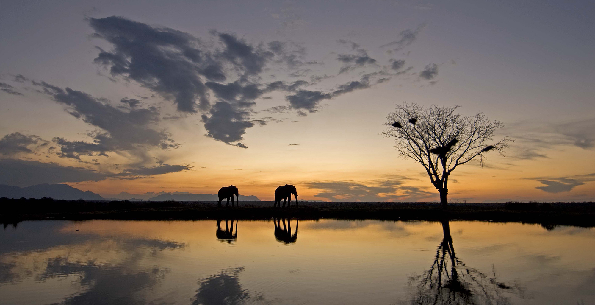 South-Africa-Kruger-National-Park-Sunset-Elephant