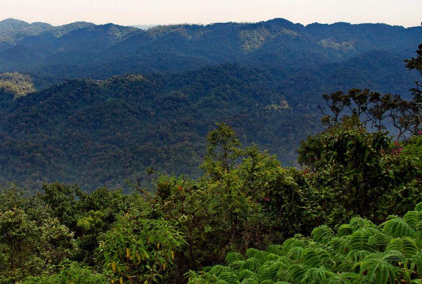 Rwanda-Nyungwe-National-Park-Landscape