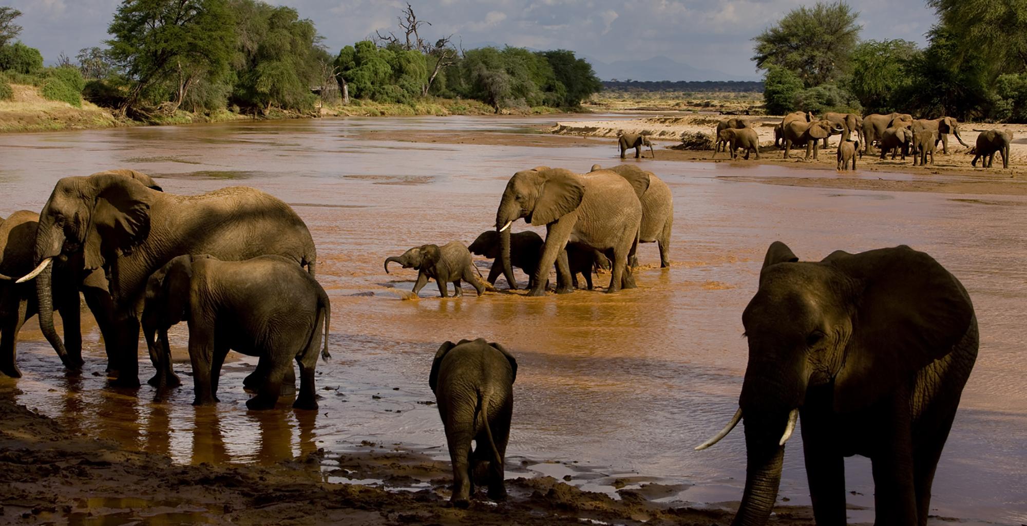 Kenya-Elephant-Watch-Elephants