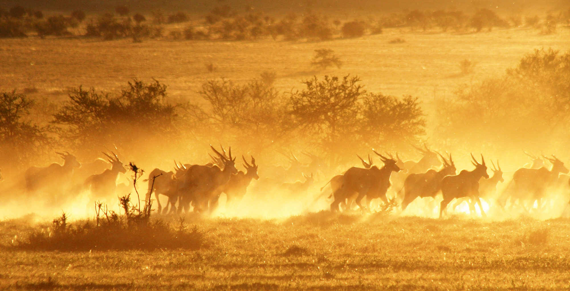 South-Africa-Great-Karoo-Wildlife-Dust