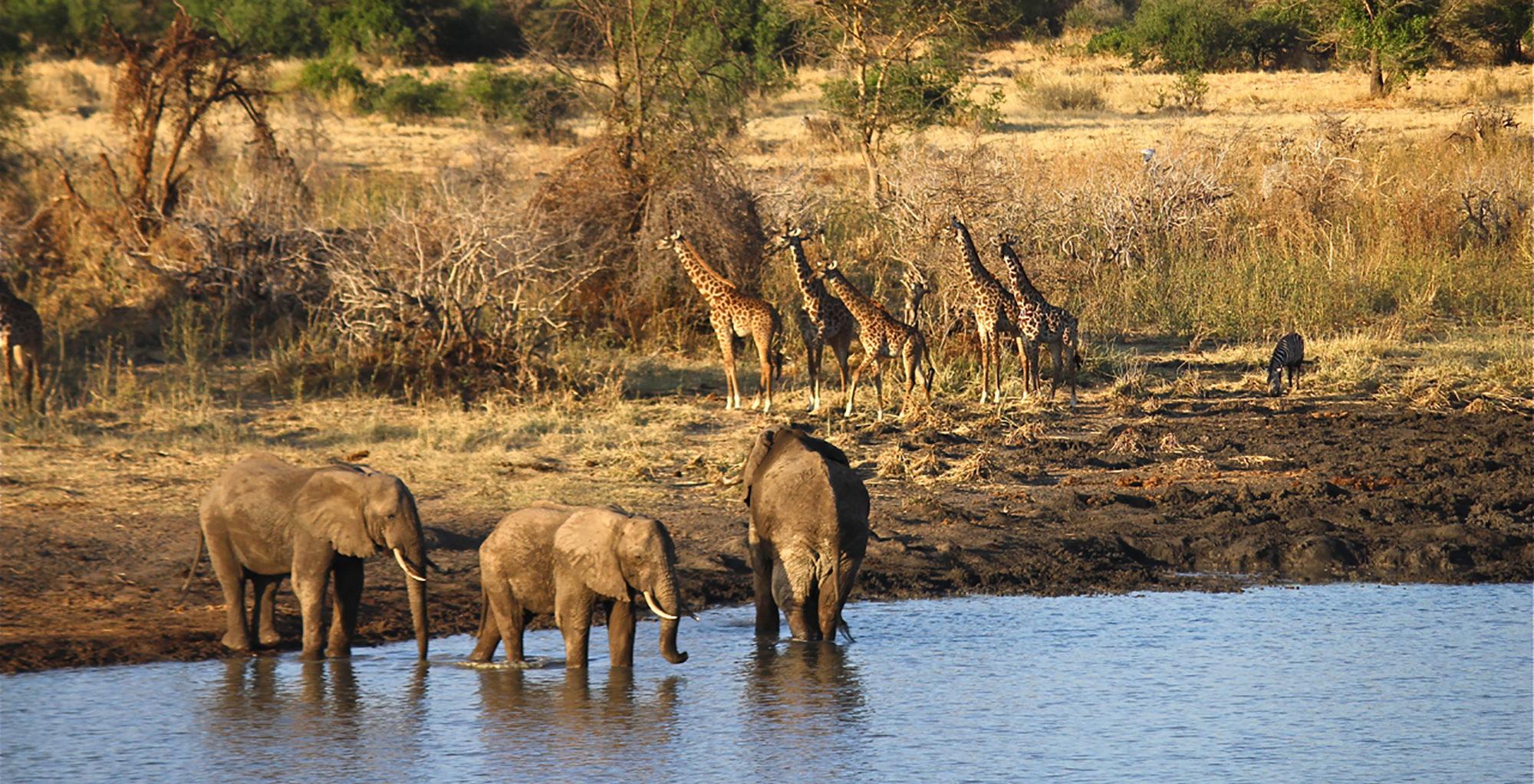 Tanzania-Arusha-Wildlife