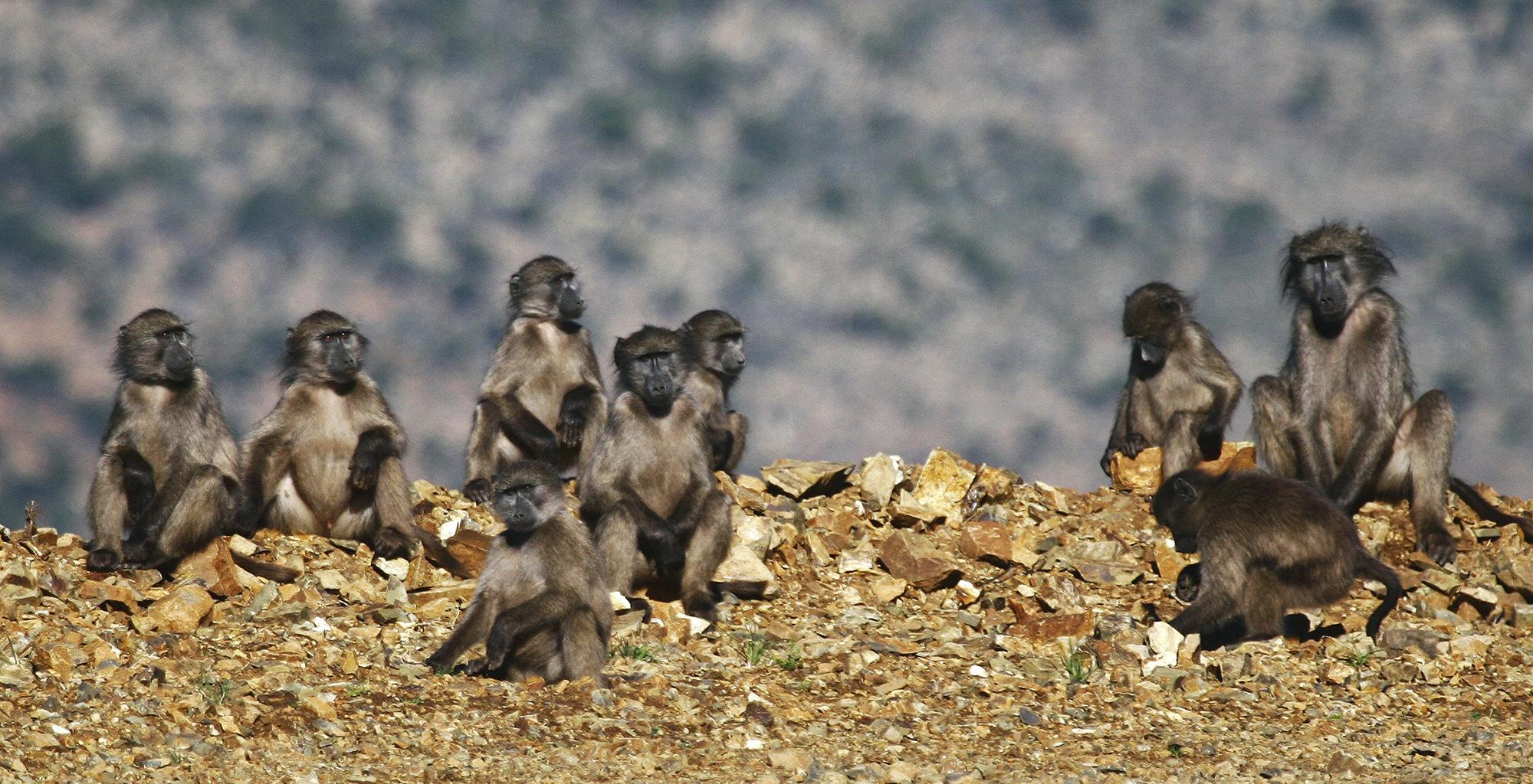 South-Africa-Great-Karoo-Wildlife