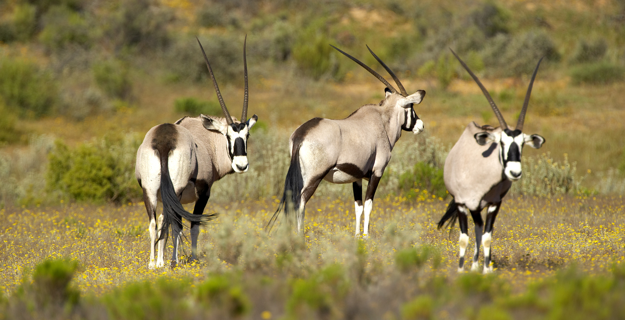 South-Africa-Bushmans-Kloof-Wildlife