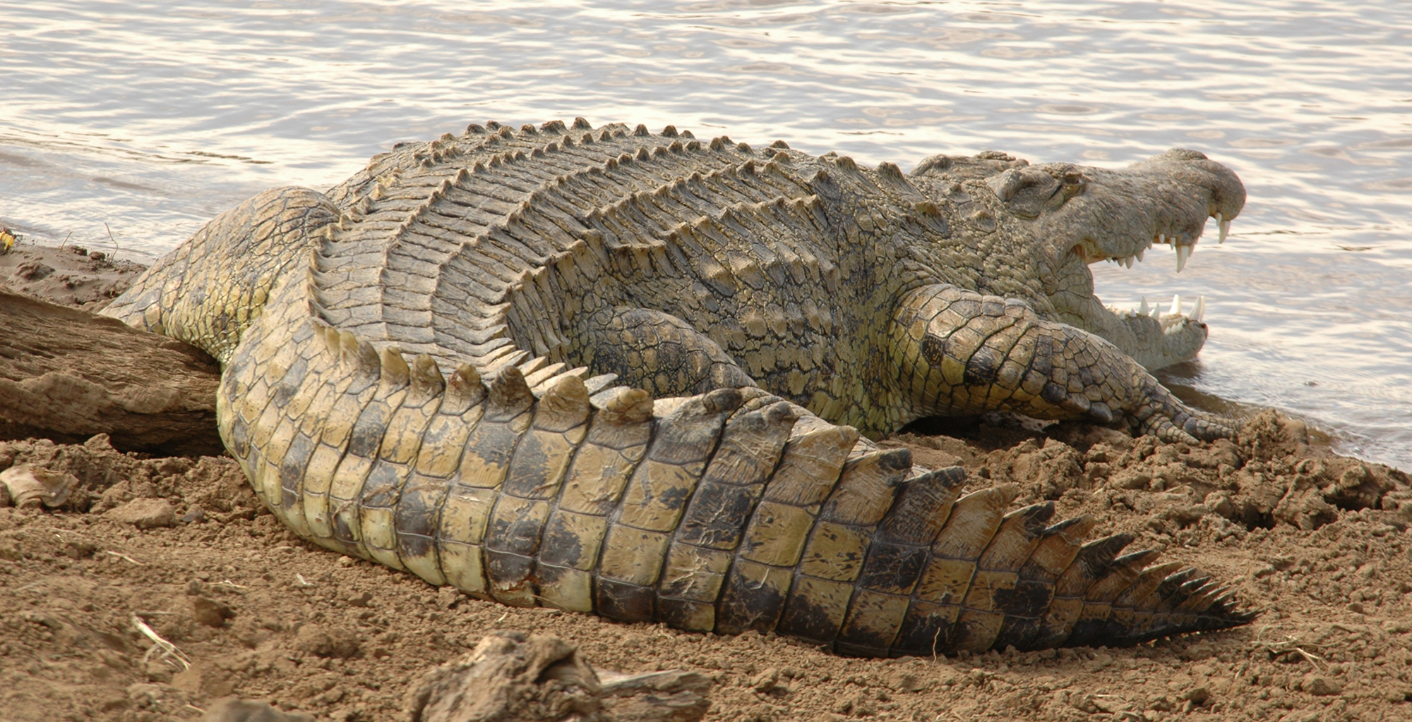 Kenya-Tana-Delta-Camp-Crocodile