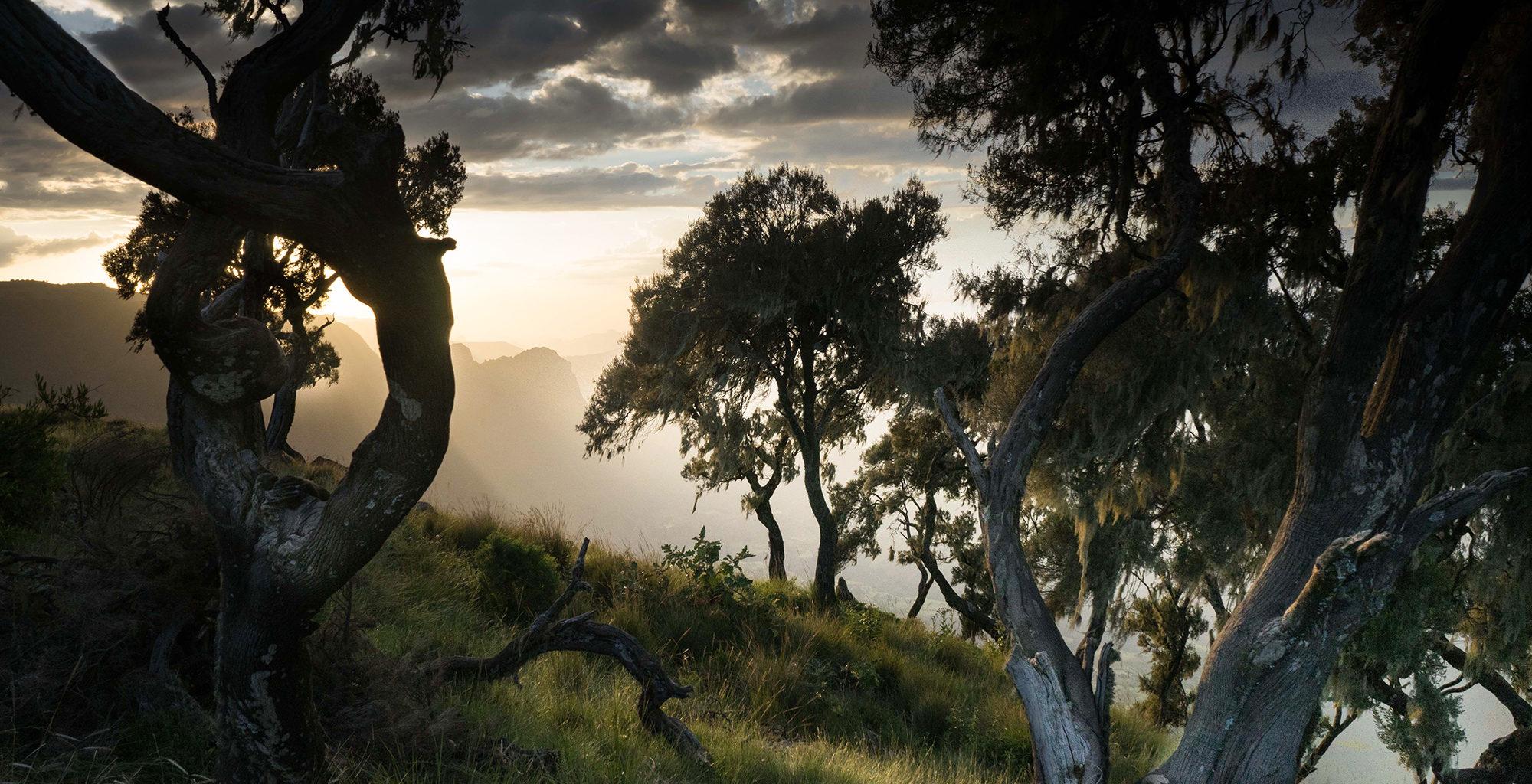 Ethiopia-Simien-Mountains-Trees