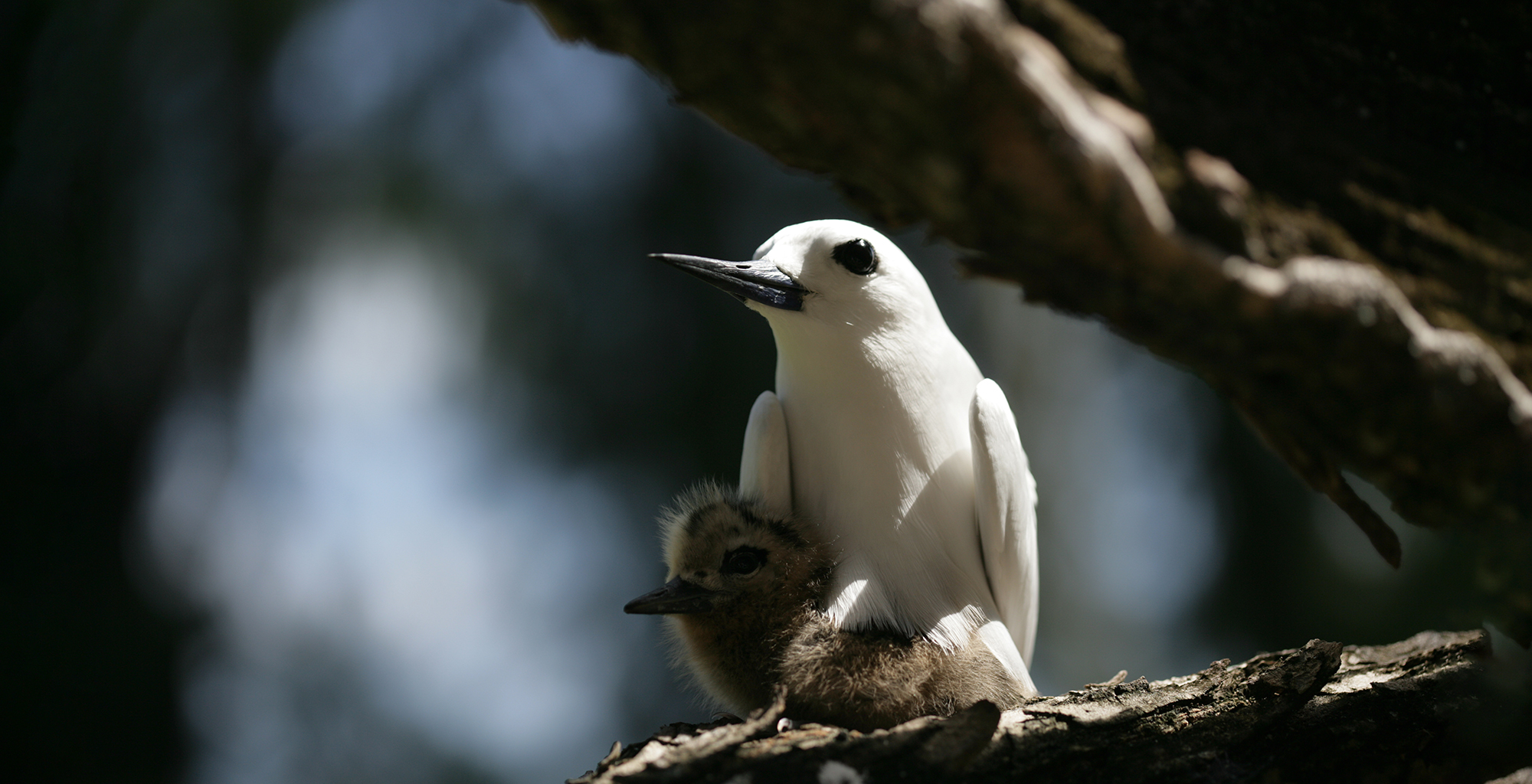 Seychelles-Denis-Island-Lodge-Wildlife