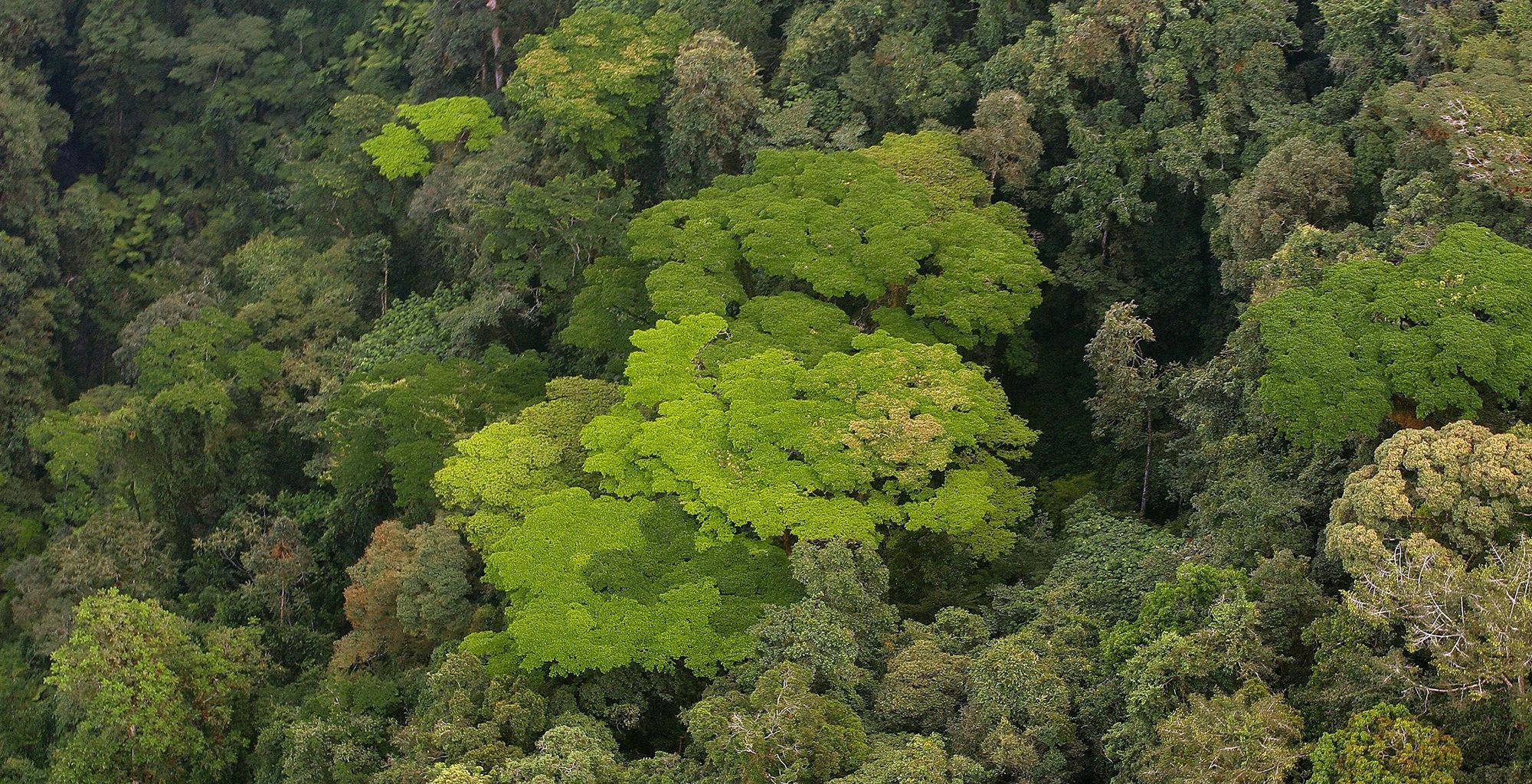 Rwanda-Nyungwe-National-Park-Forest-Aerial