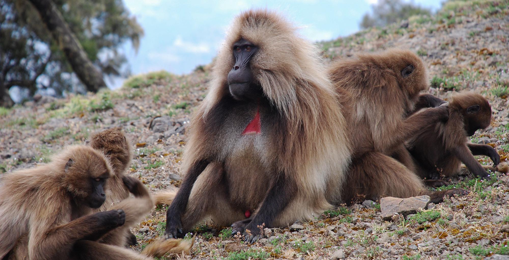 Ethiopia-Simien-Mountains-Wildlife