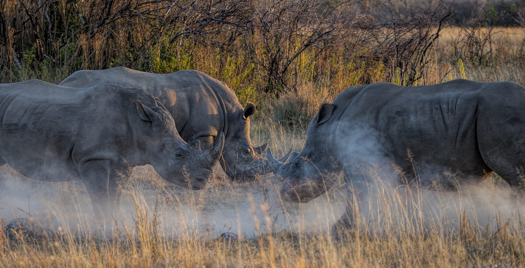 South-Africa-Waterberg-Rhino