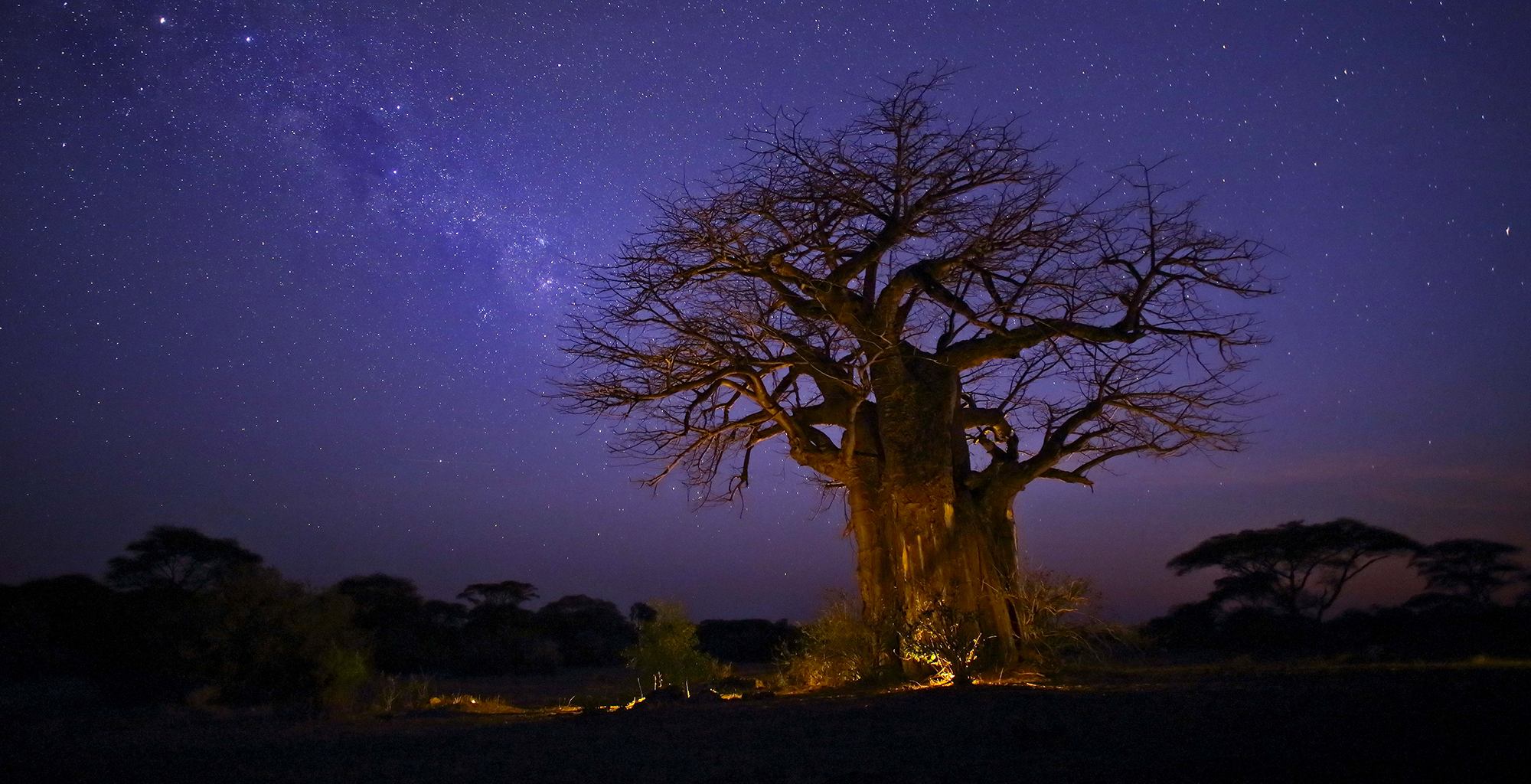 Tanzania-Ruaha-National-Park-Baobab-Night