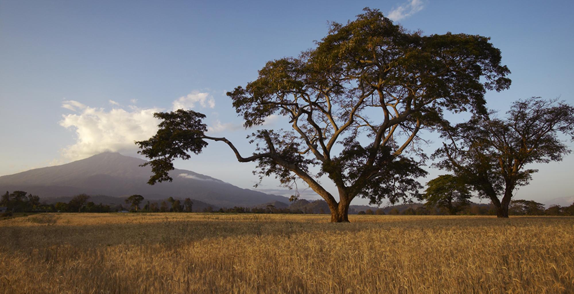 Tanzania-Kigongoni-Surroundings
