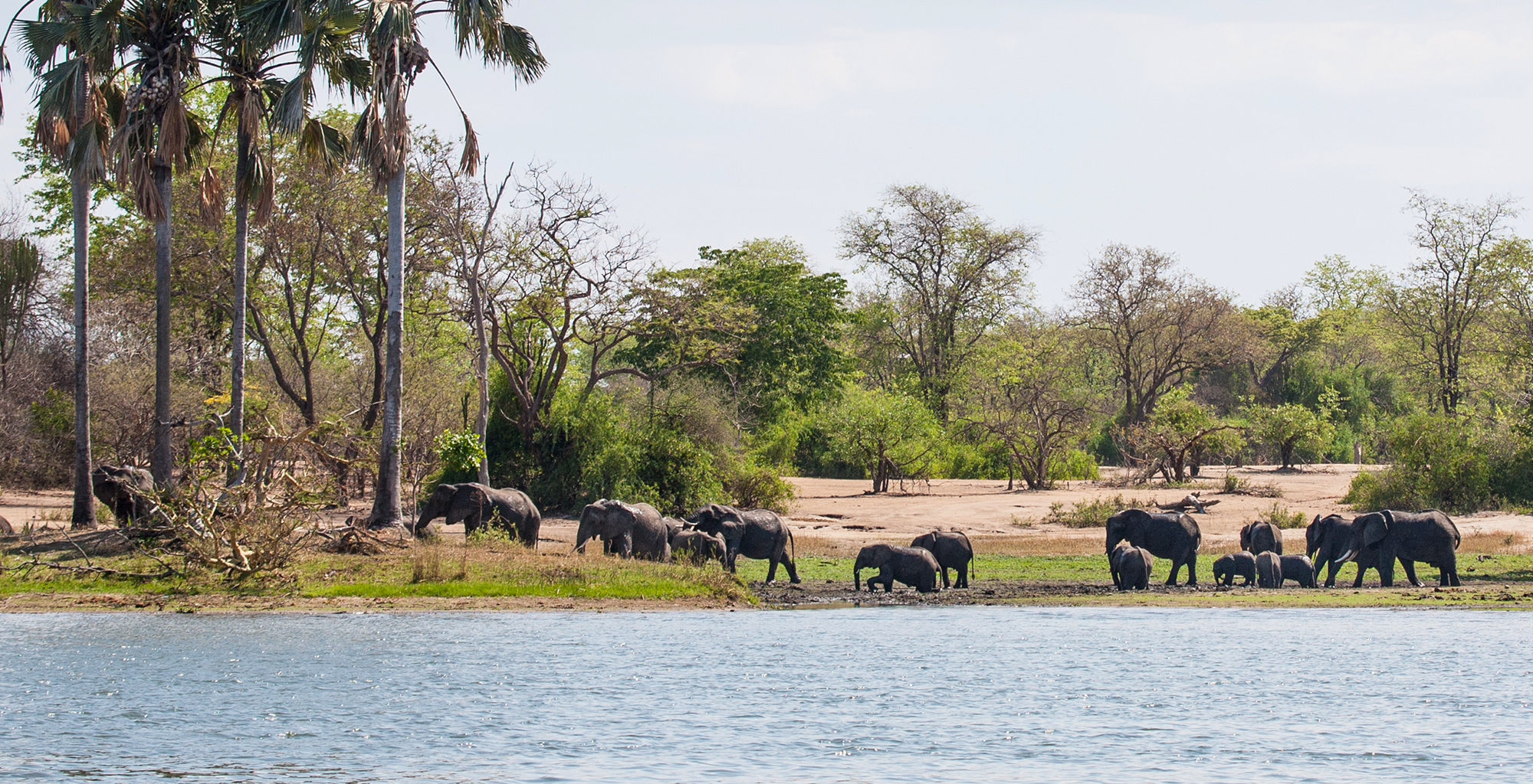 Malawi-Liwonde-National-Park-Elephants-by-River