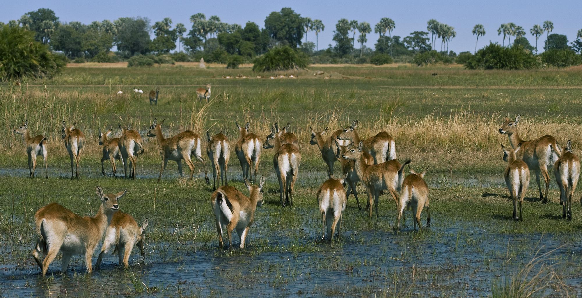 Botswana-Little-Mombo-Wildlife