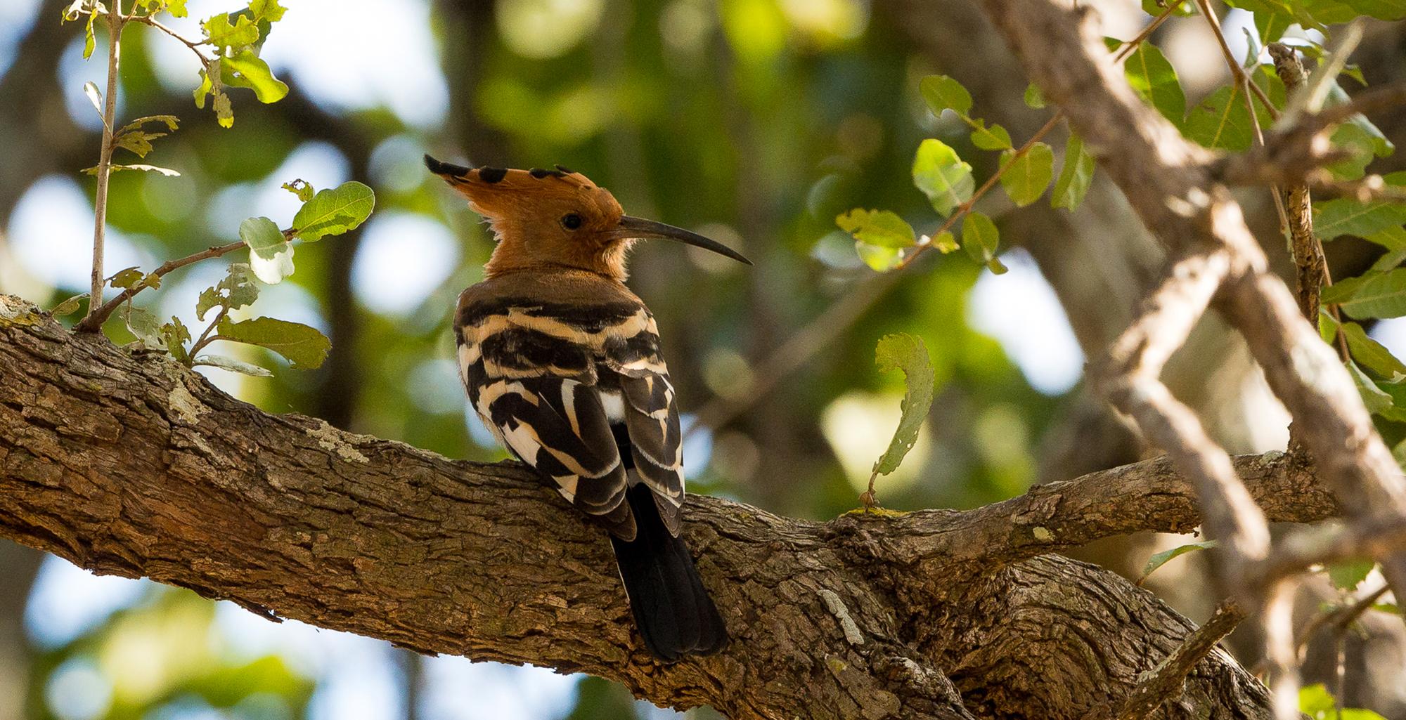 Malawi-Majete-Wildlife-Reserve-Bird
