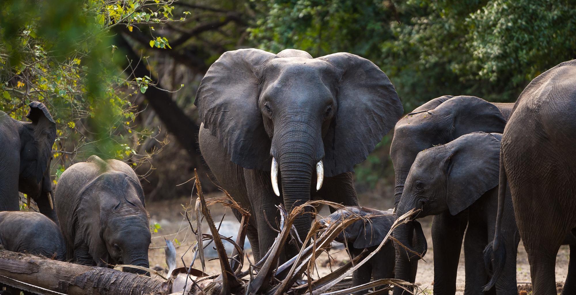 Malawi-Majete-Wildlife-Reserve-Elephant